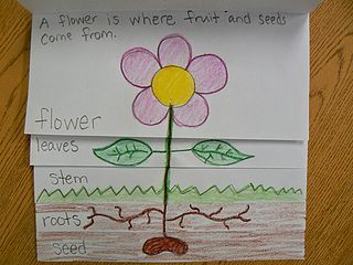 Plant Parts Flip Book (Mrs. T\'s First Grade Class) | Science ...