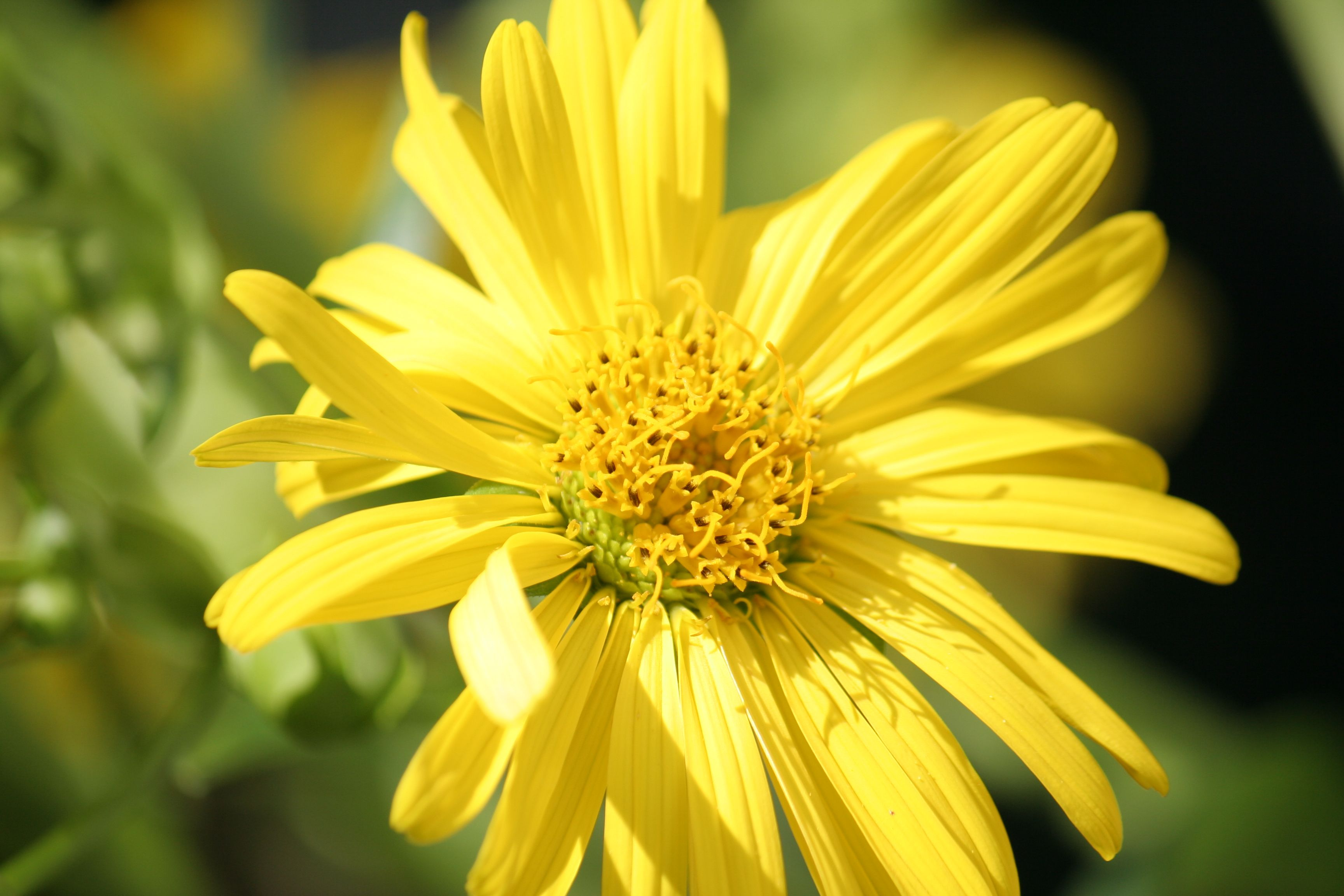 Pretty Yellow Flower Photography Hubbys And Others Pinterest