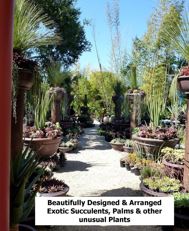 San Jose S Best Garden Nursery For Unusual Succulents Palmore Many Of The Unique Family Owned Nurseries In Silicon Valley Have Given Wa