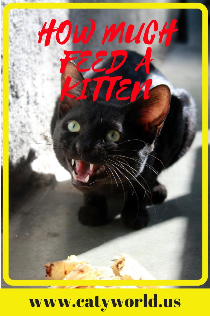 How Much To Feed A Kitten Kitten Adoption Baby Kittens Feeding Kittens
