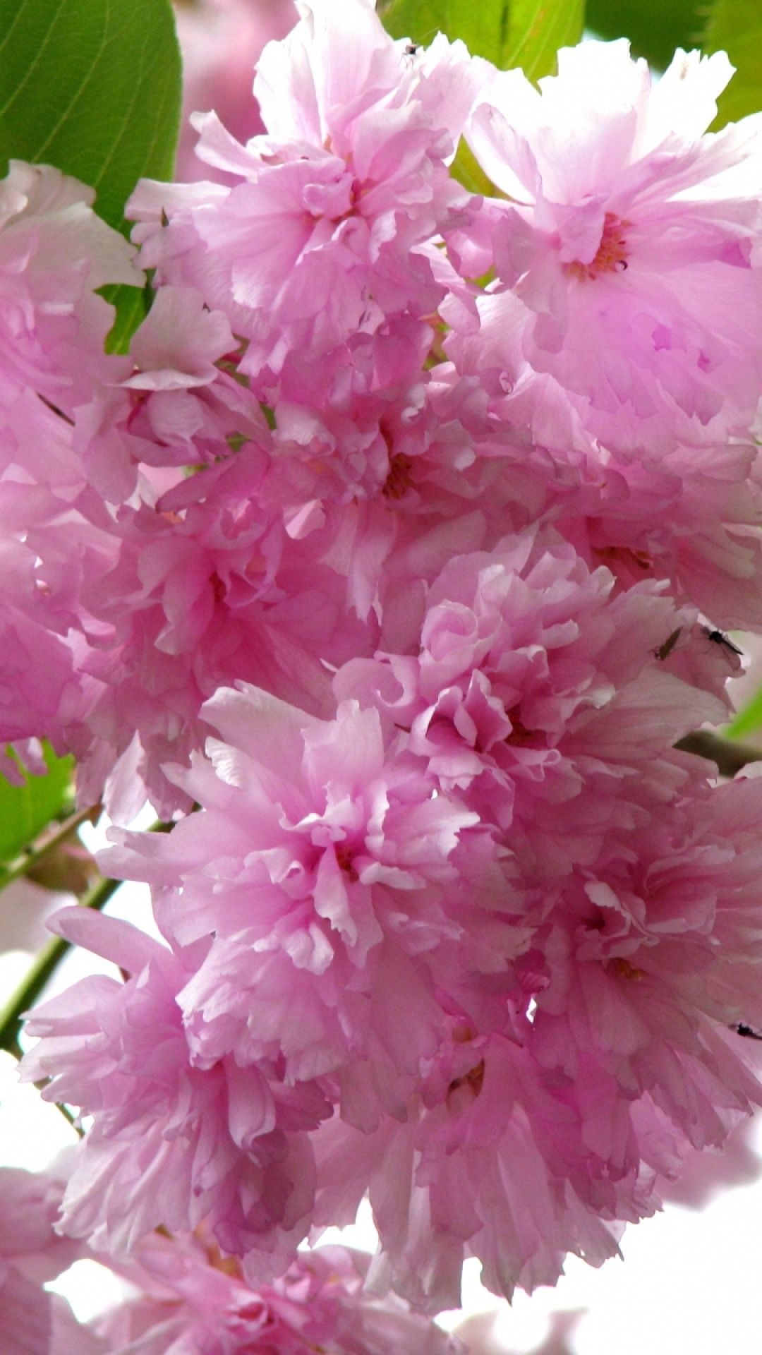 flowering, branch, leaf, spring, closeup (With images