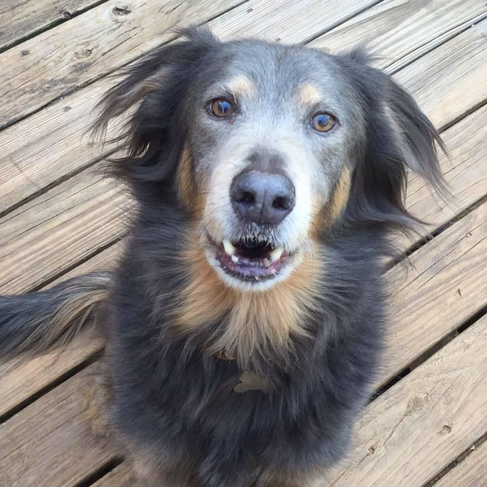 Adopt Starlette On Animal Rescue Pets Rescue Dogs