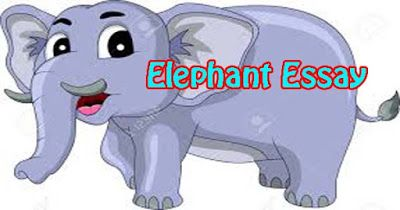 Hania Naz Grammar The Elephant Essay In English Fictional Characters An On