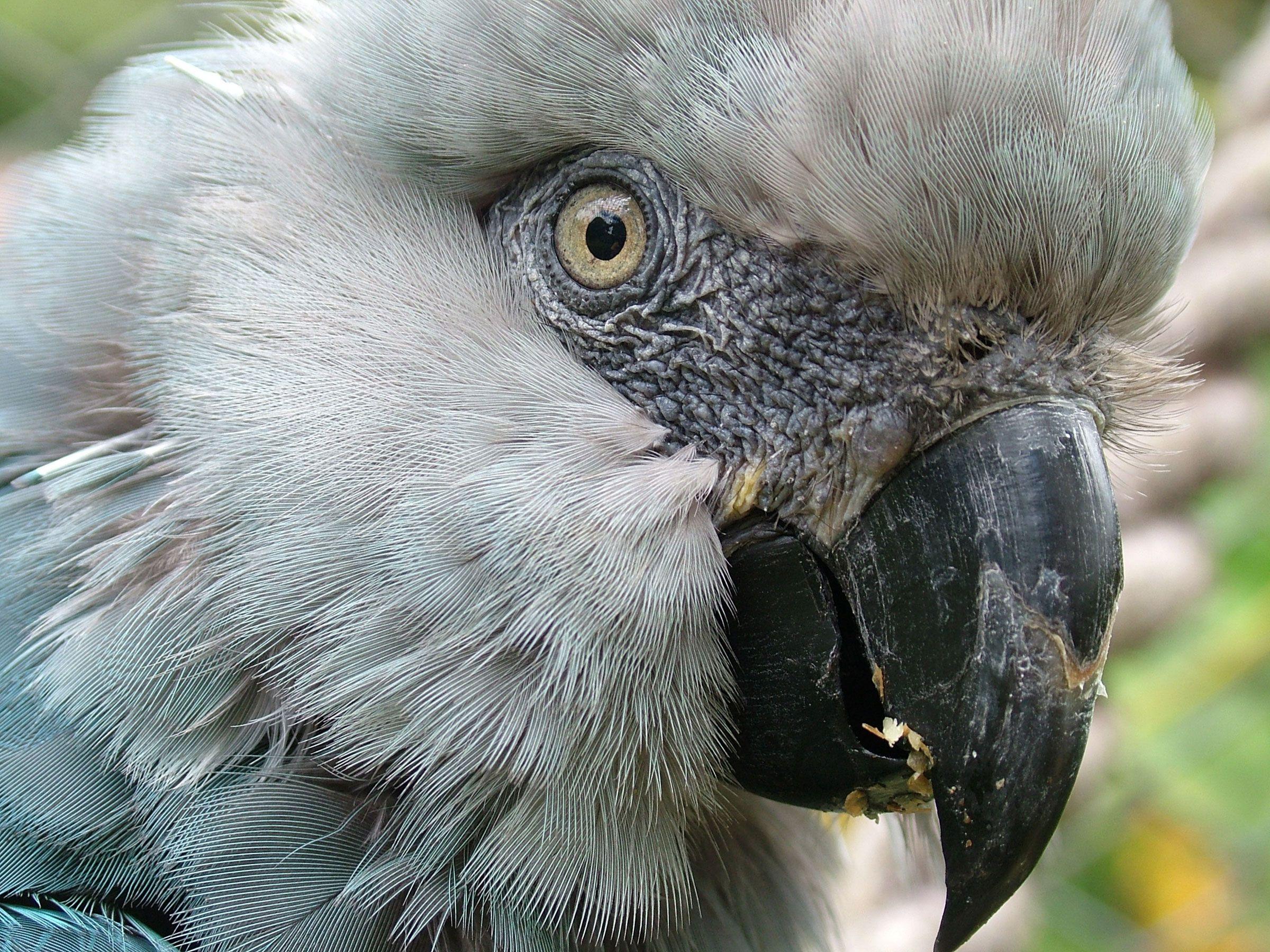 ปักพินในบอร์ด Birds