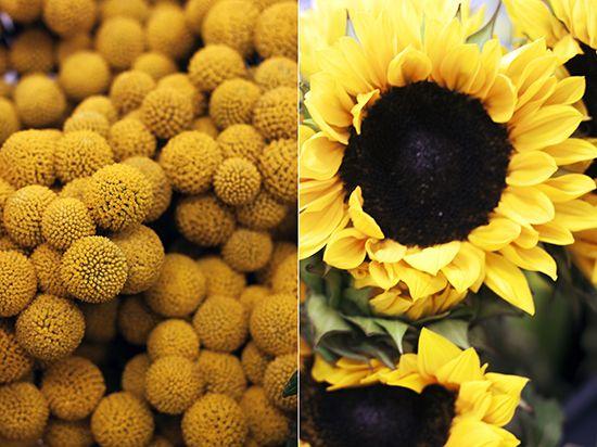 Vendor Spotlight: Alaska Flower Market