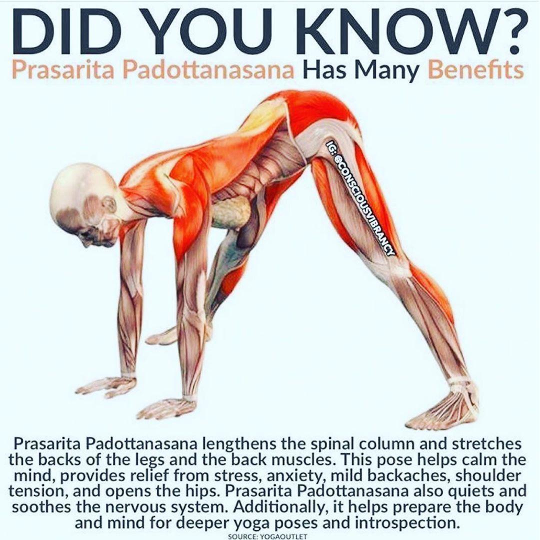 ૐ Prasarita Padottanasana ૐ Yoga Postures Yoga Anatomy