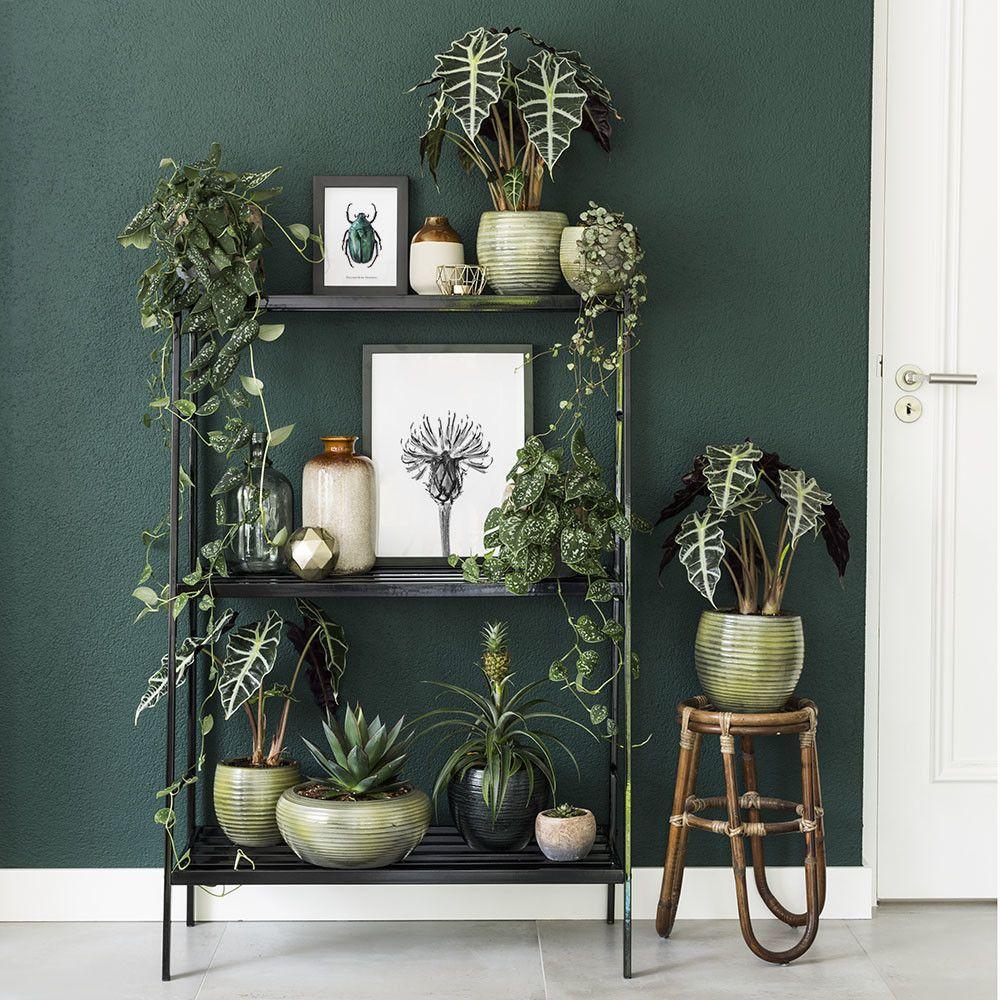 Rek met kamerplanten en botanische prints voor een donker