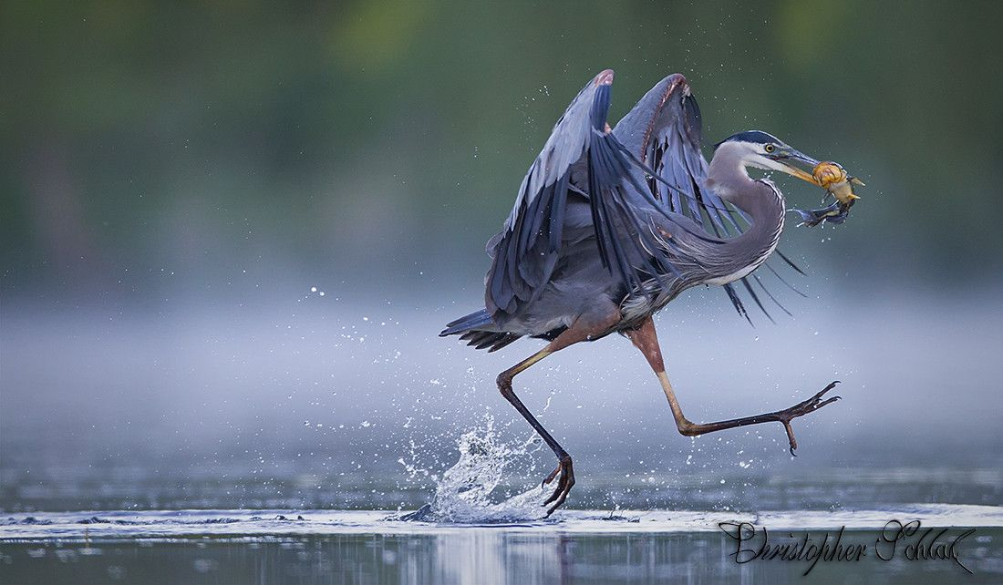 Photograph RUNNING ACROSS THE WATER by CHRISTOPHER SCHLAF on 500px
