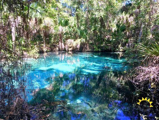 Die Springs im Ocala National Forest nahe Orlando