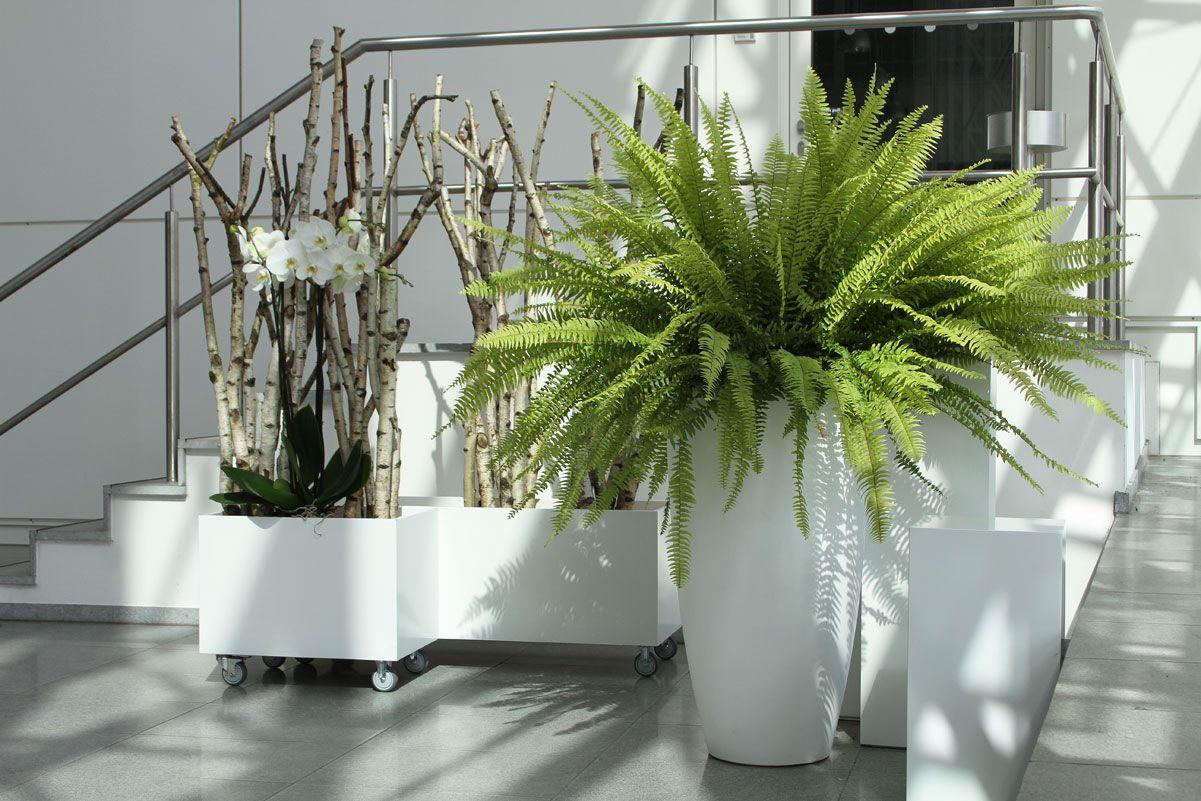 Raumteiler Hamburg pflanzen mieten plants for rent palms tree flowers divider