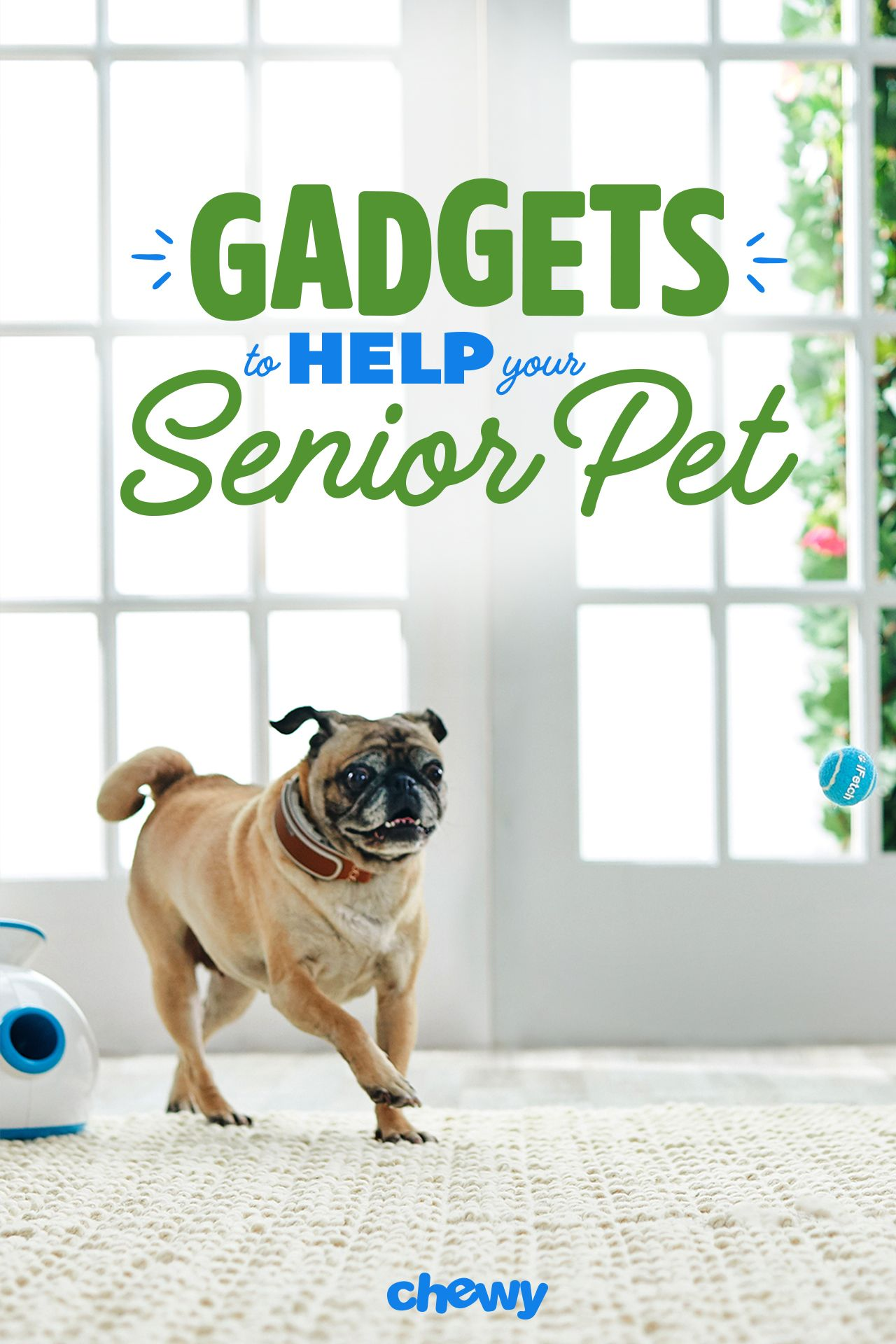In Today S High Tech World Taking Care Of Your Senior Pet Is