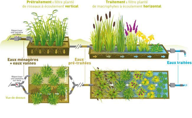 Assainissement individuel par filtres plant s - Plante de bassin filtrante ...