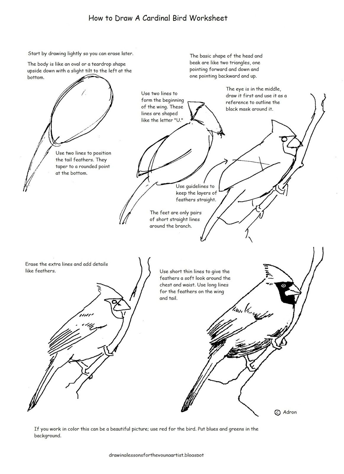 A Free How To Draw Worksheet For Drawing A Cardinal