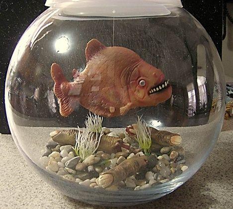 I love this! Pet goldfish on Halloween Forum Hallelujah Halloween - halloween fish tank decorations