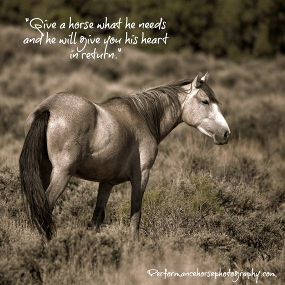 Nimbus from Sand Wash Basin Wild Horse Herd by ThruWildEyes ...