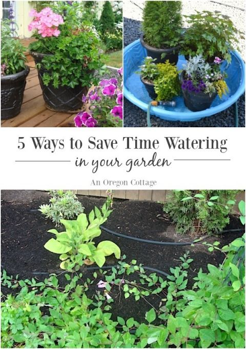 Five Ways to Save Water and Time in Your Garden | Save water, Water ...