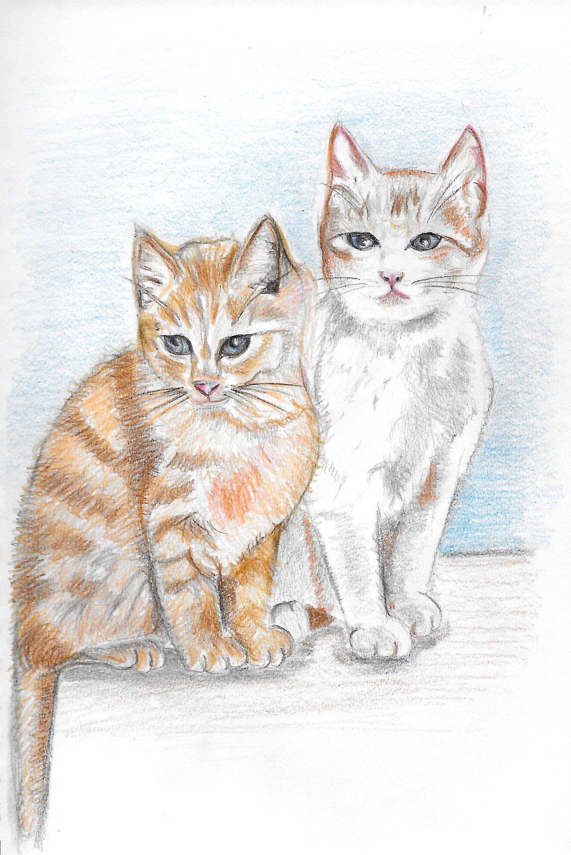 Kätzchen Zeichnen