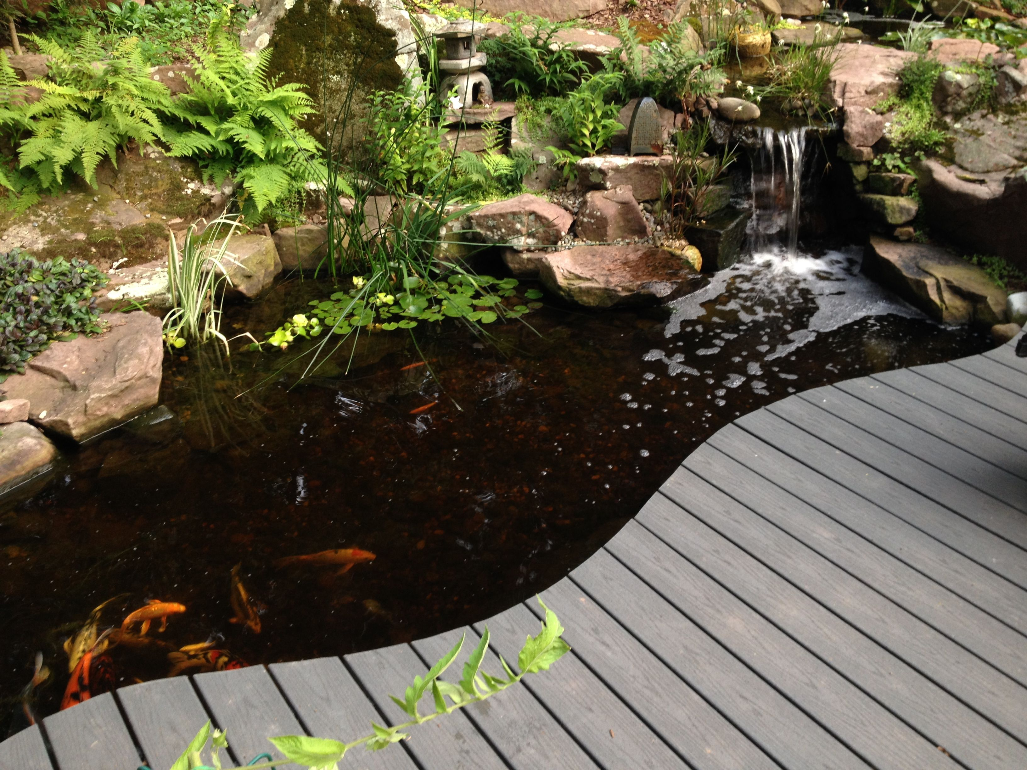 Backyard Koi Pond With Curving Deck Pa Yorkpa Lancasterpa Harrisburgpa Ponds Koipond Backyardideas Waterg Backyard Landscaping Backyard Koi Fish Pond