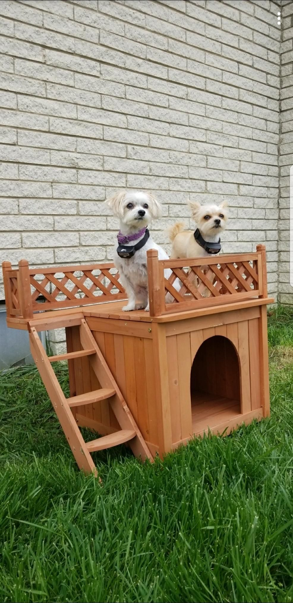 This Dog House Is Designed For Smaller Pets Raised Panel Floor Keeps Your Dog Dry Cool Dog Houses Dog House Best Dogs
