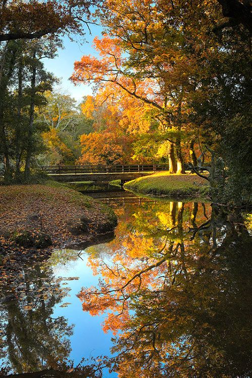 Nature's Mirror #autumnscenery