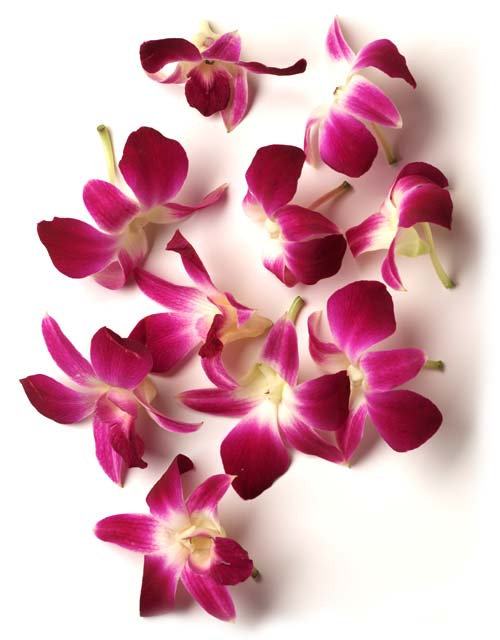 Fresh Hawaiian Orchid Leis Loose Orchid Blooms In 2020 Orchid Lei Orchid Flower Orchids