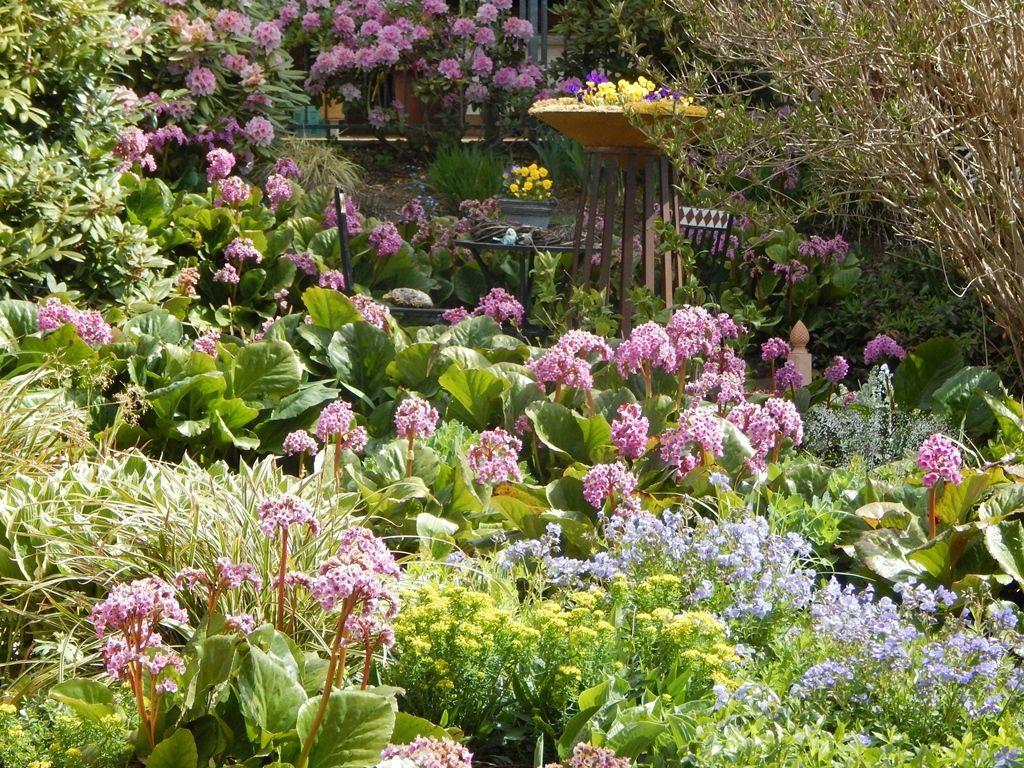 mein garten blüht zurzeit rosa - bilder und fotos | garden, Garten und bauen