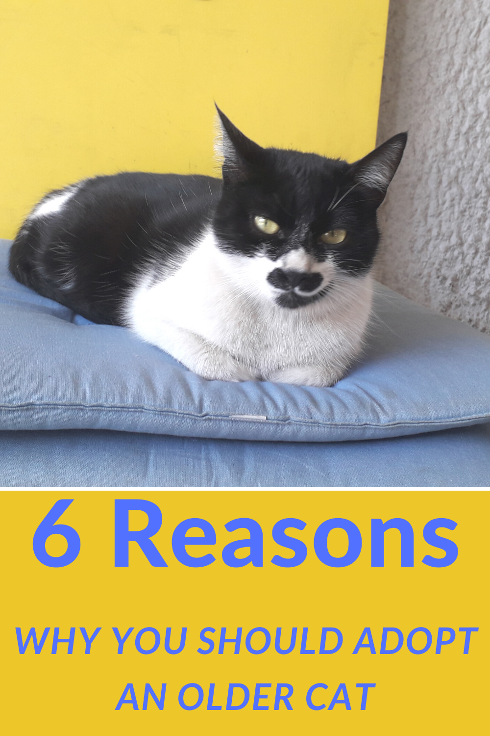 6 Reasons Why You Should Adopt an Older Cat in 2020 (With