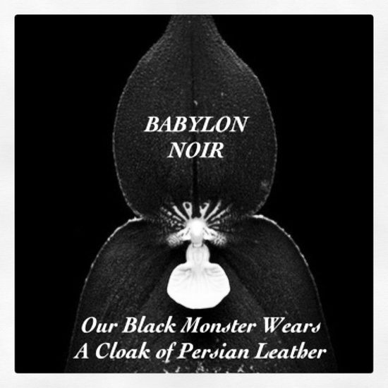 BABYLON NOIR ~ The Scent Of Seduction www.OpusOils.com