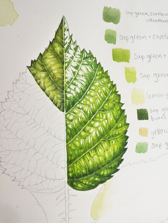 Botanical Illustration Step By Step Painting Of Leaves