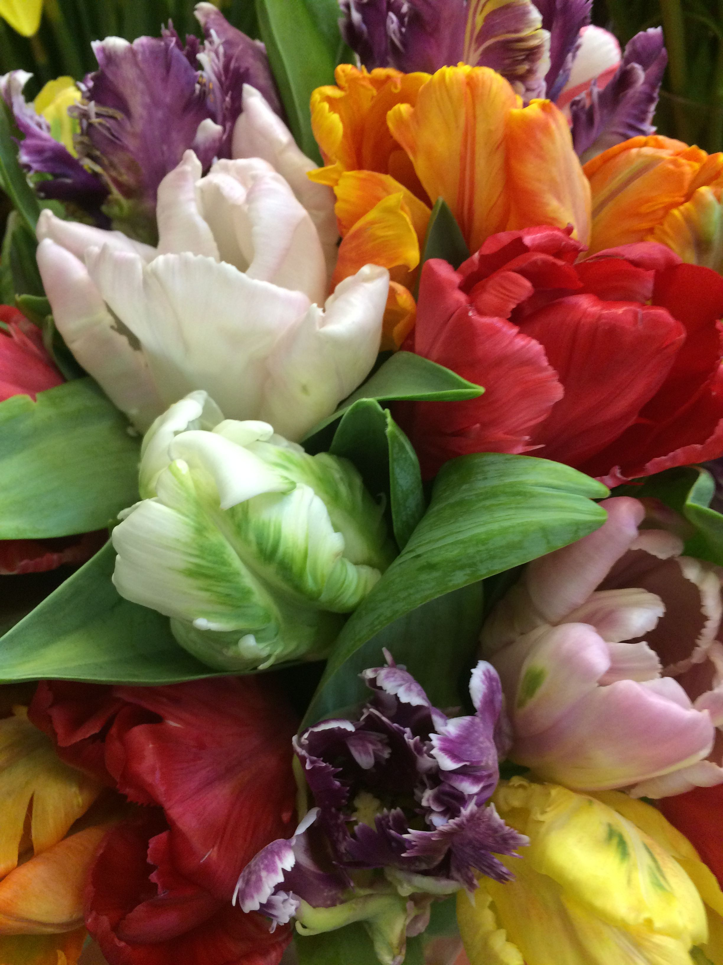 French Tulips Flower names, Tulips, Plants