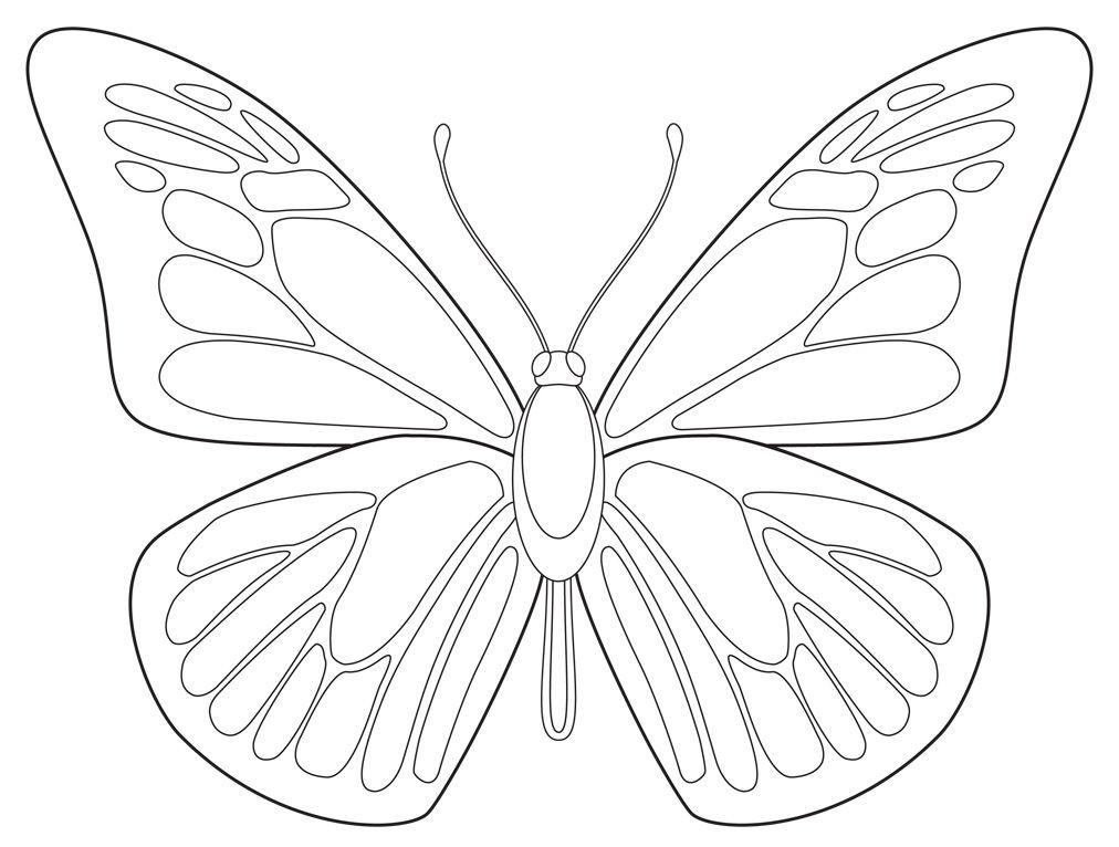 draw butterfly - Google Search | Scripture Art | Pinterest ...