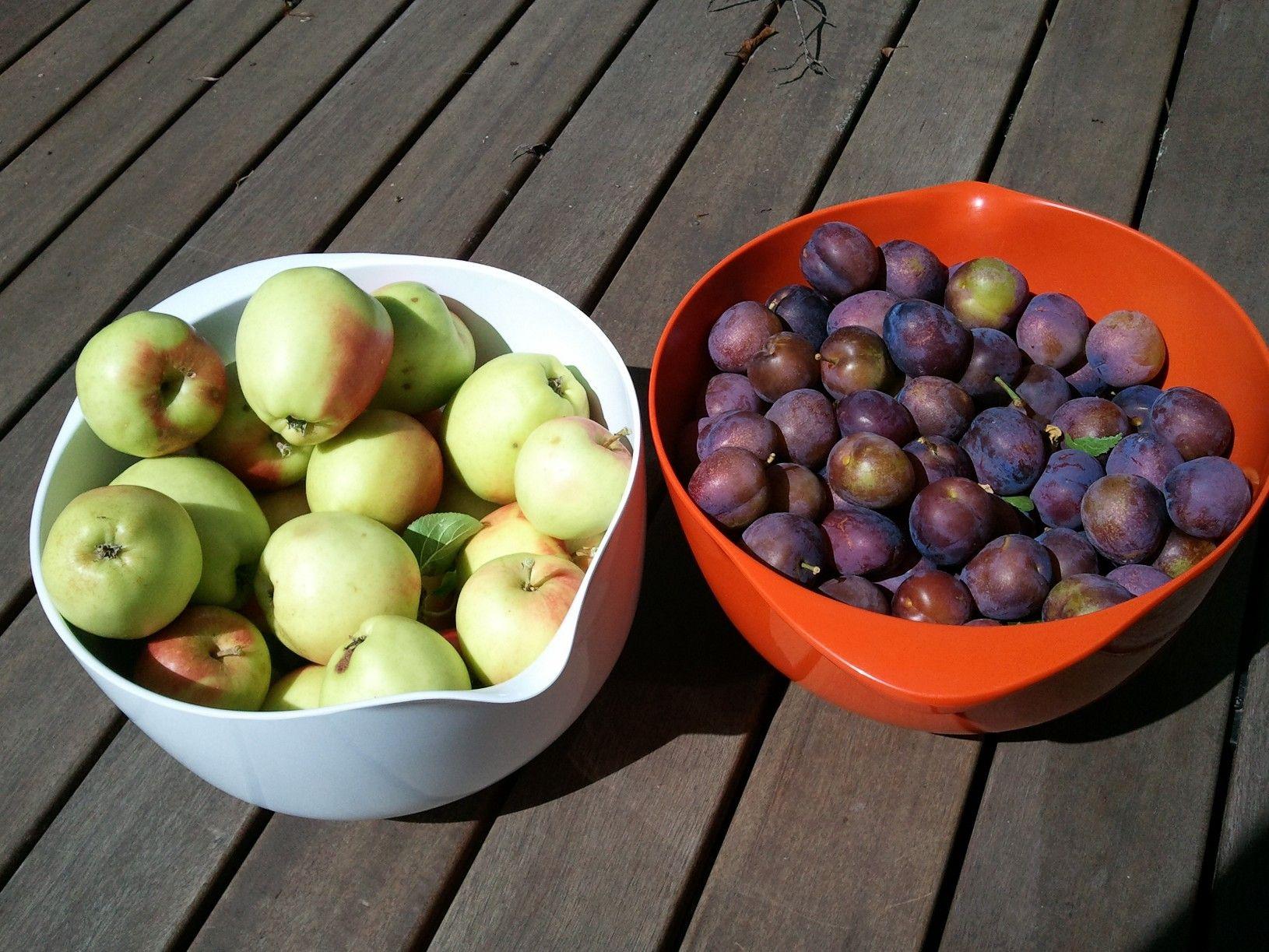 Our garden bounty