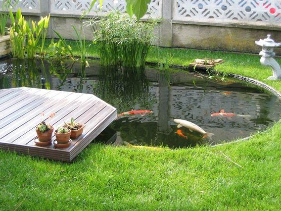 Le Frai Des Carpes Ko En Juin  Bassin De Jardin