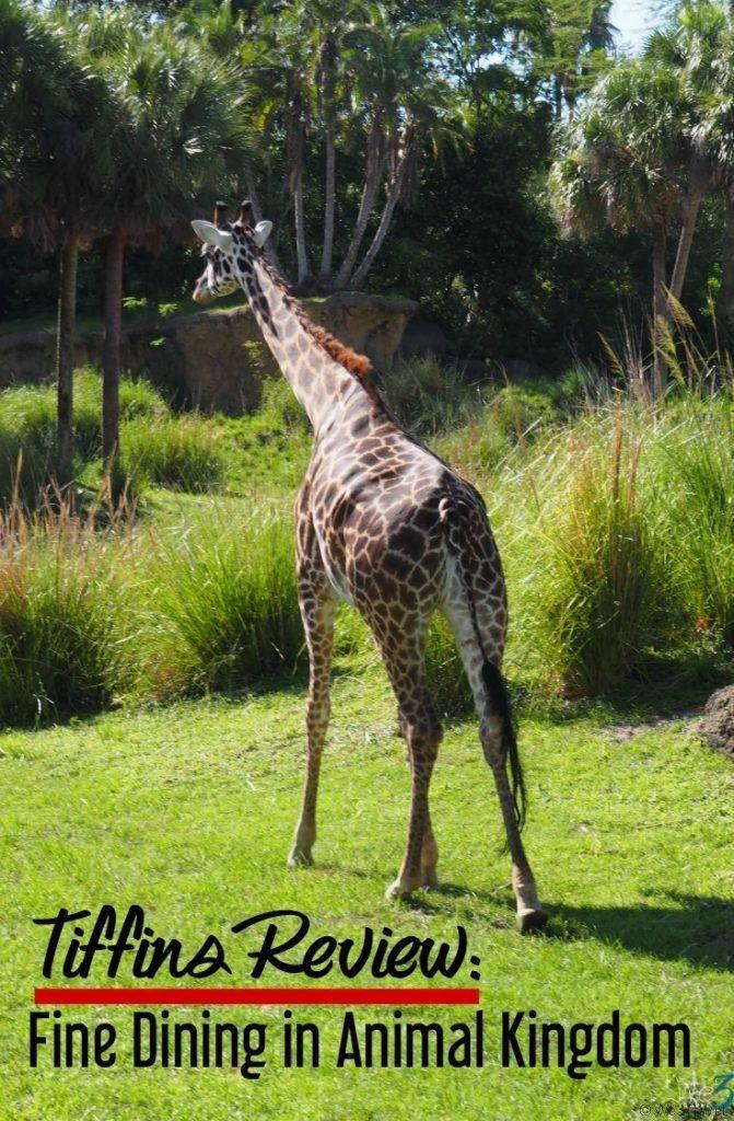tiffins review fine dining in animal kingdom at disney