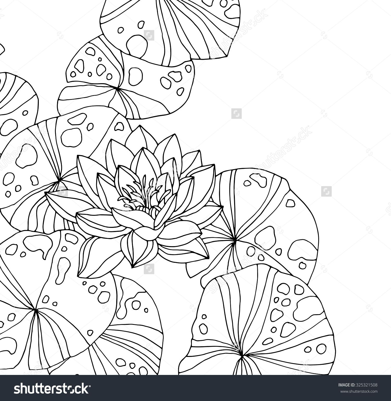 Waterlilies Isolated On White Forest Wild Plant Lotus Pond Zen Garden Vector