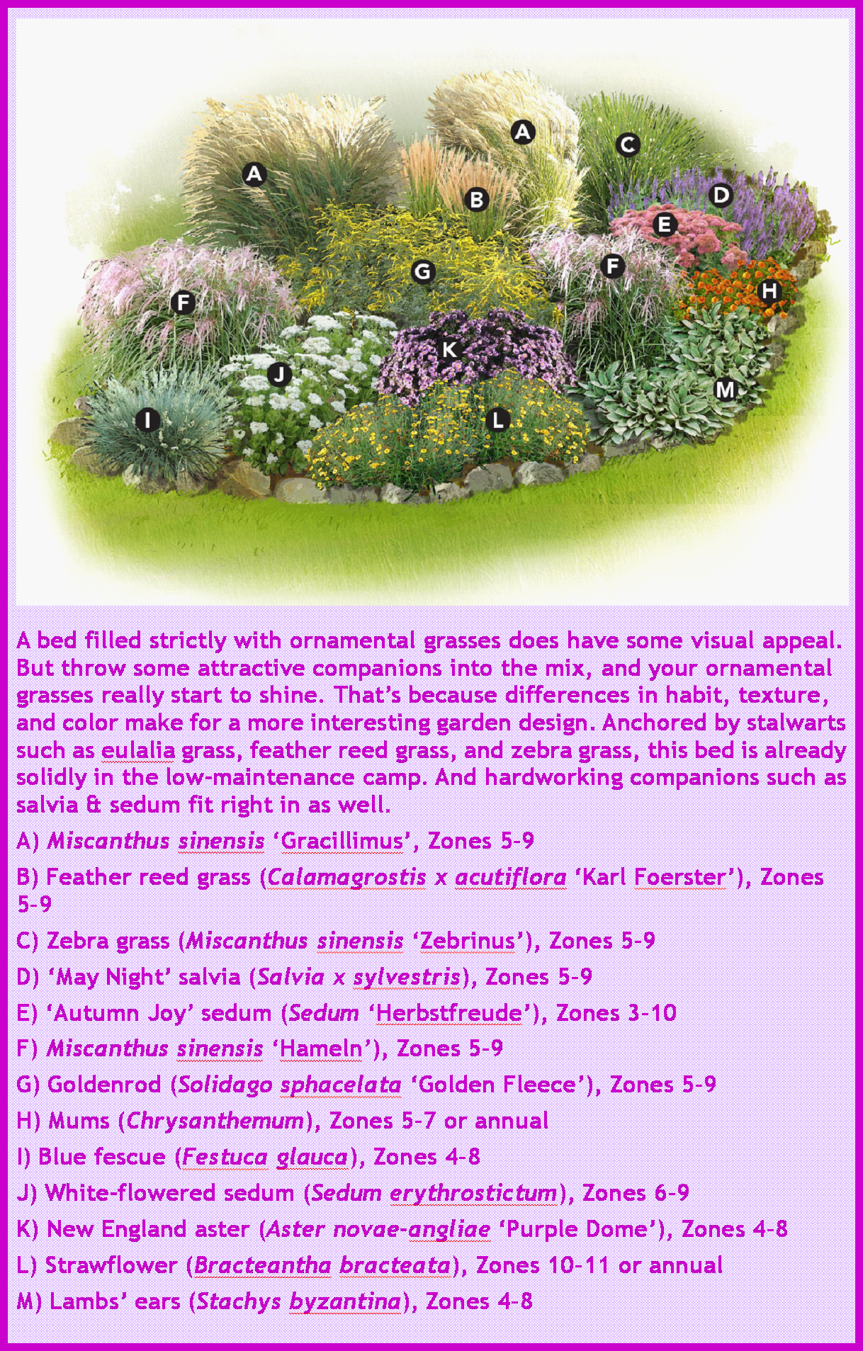 ORNAMENTAL GRASSES GARDEN PLAN | Small flower gardens ...