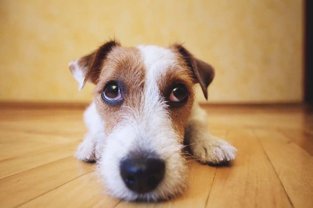 Primova Hemp Oil Can Prevent Seizures Dog Expressions Dogs