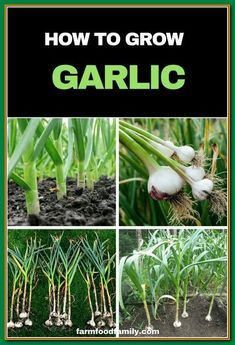 How To Make Your Organic Garden Grow: Tips And Tricks