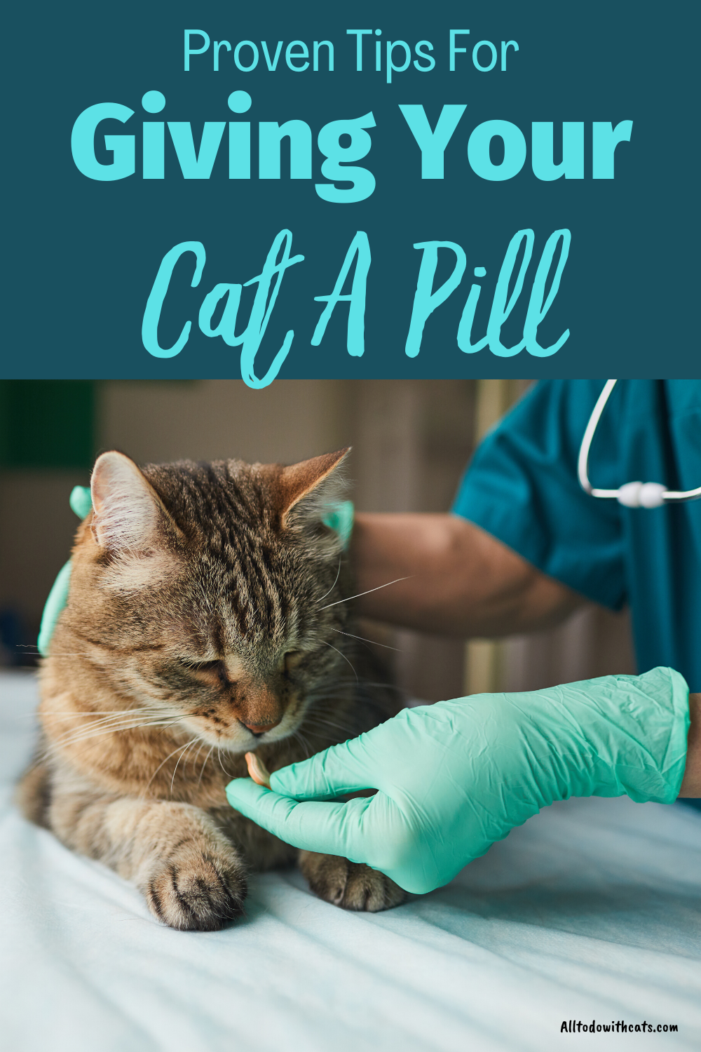 How To Get Your Cat To Take A Pill And Not Get Attacked All To Do With Cats In 2020 Cats Cat Health Problems Pills