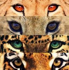 Quais são os olhos que mais gostam?  Veja mais em: http://www.jacaesta.com/quais-sao-os-olhos-que-mais-gostam/
