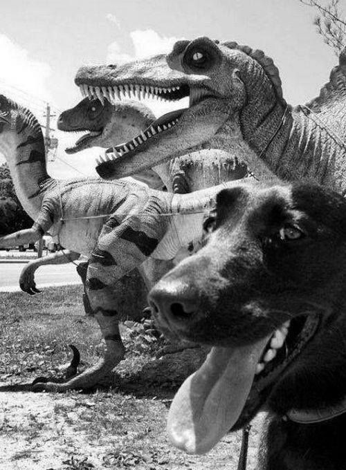 Pin by Nile Sky Pearl on dino Dog life, Funny animals