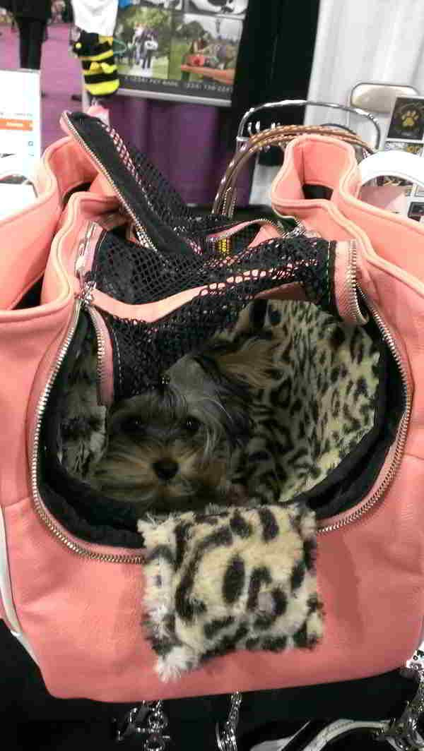 Yorkie Carrier Purse Google Search Safe Dog Toys Puppy Purse