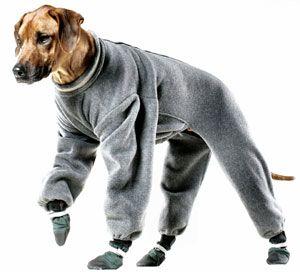 How To Make A Dog Harness Dog Raincoats Timers Dog Collars