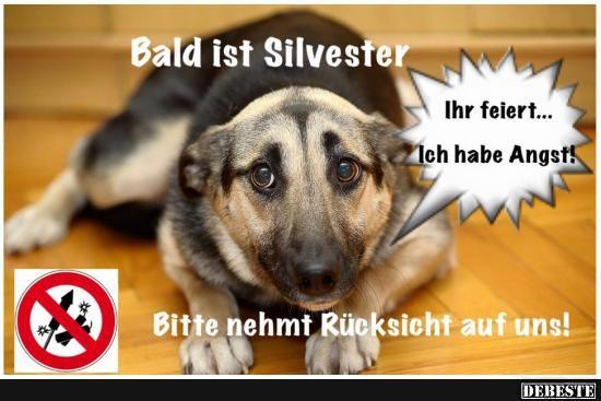 Bald Ist Silvester Silvester Lustig Hundespruche Hund Zitat