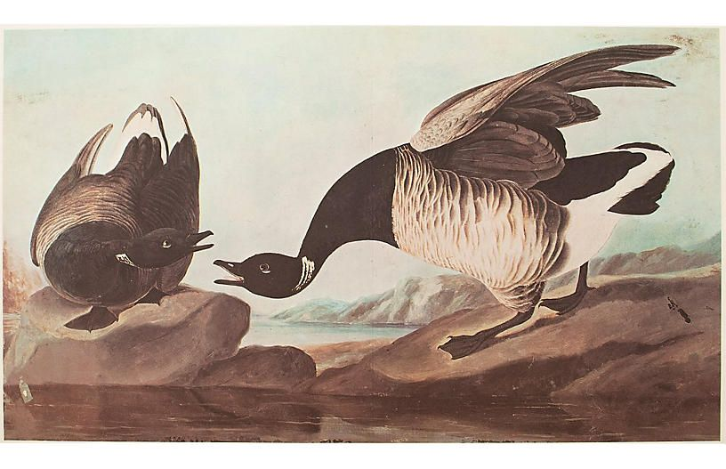 Audubon Brant Goose Lithograph 1966 Original Watercolor