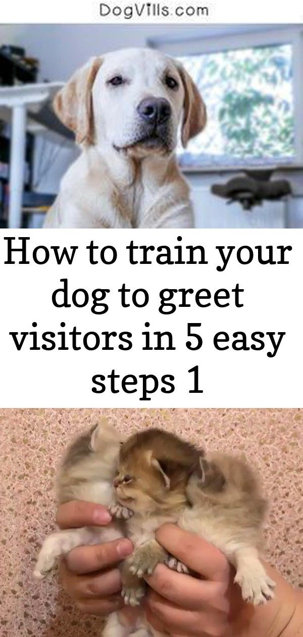 How to train your dog to greet visitors in 5 easy steps 1 Want Fido to stop trampling everyone who walks through your door Check out our guide for how to train your dog t...