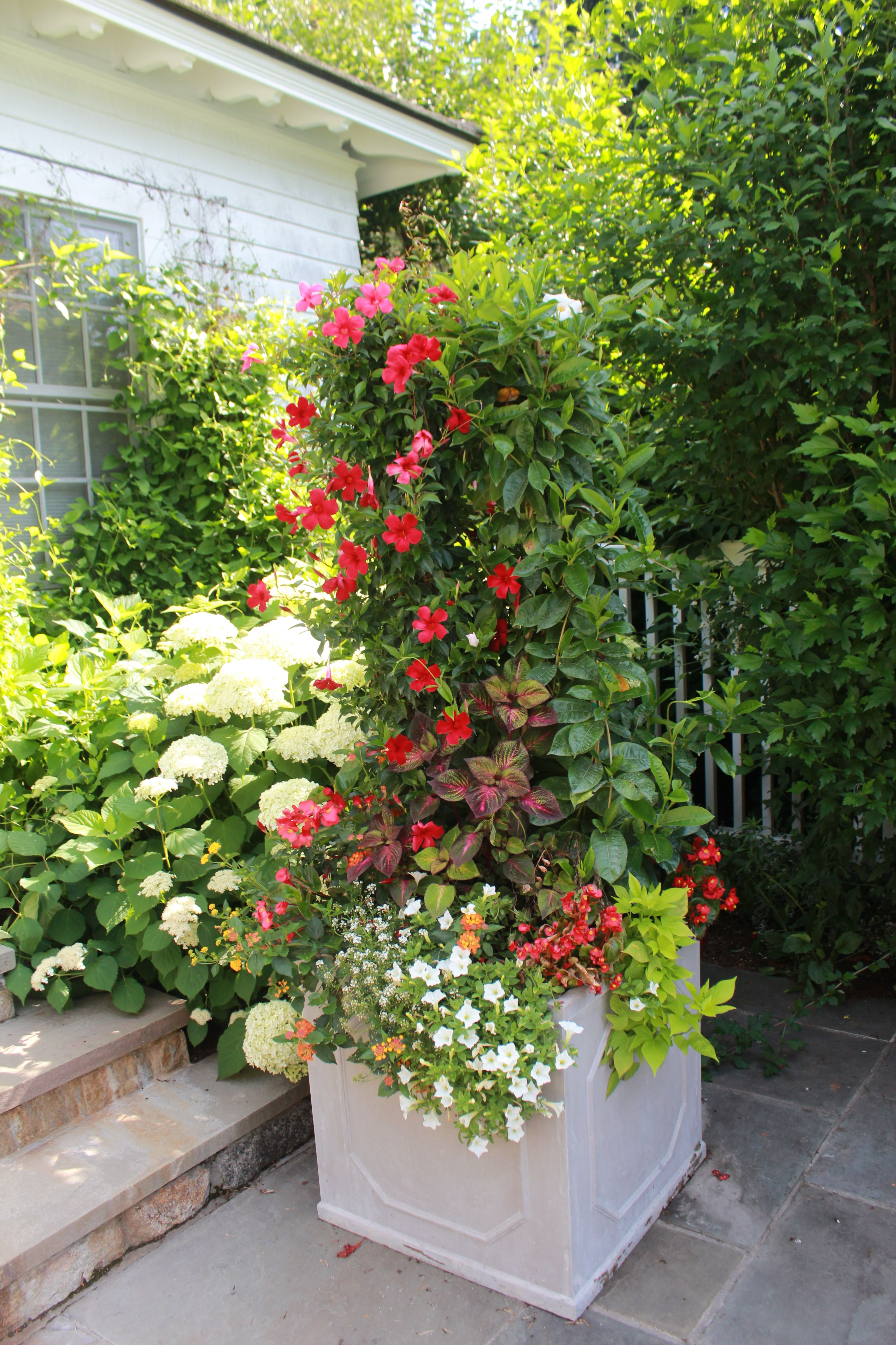 Beautiful Summer Container Gardens