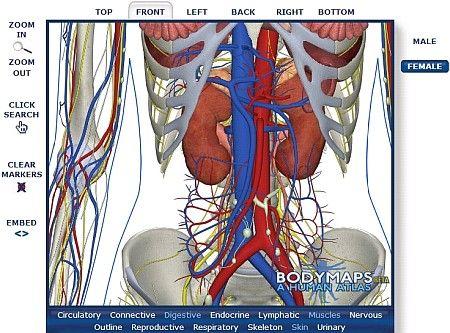 BODY MAPS un nuovo Atlante Umano di Anatomia Online ( clicca l'immagine per continuare a leggere )
