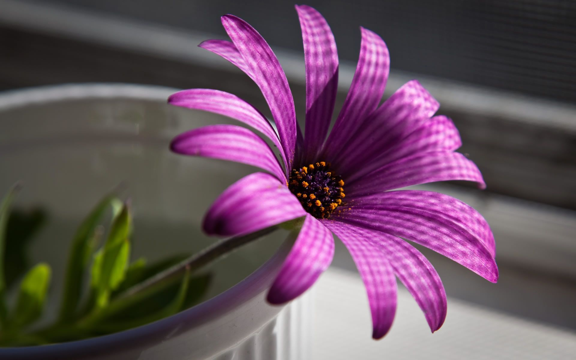 Purple Flowers Wallpapers Wallpaper Cave Фиолетовые