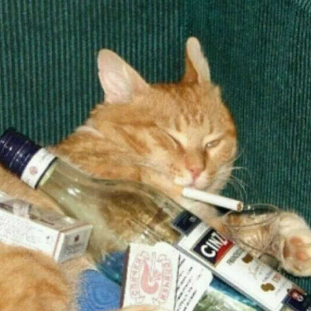 Vitacat Vitamin Pacifier For Cat Free Shipping Hot Selling Cat Memes Cats Animal Memes